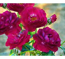 Red Roses at Sunset Photographic Print