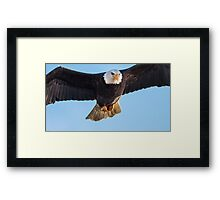 Eagle in Your Face Framed Print