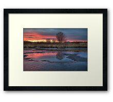 Swamp Symphony 2 Framed Print