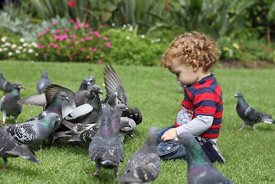 Eli and the Pigeons by Roxanne du Preez