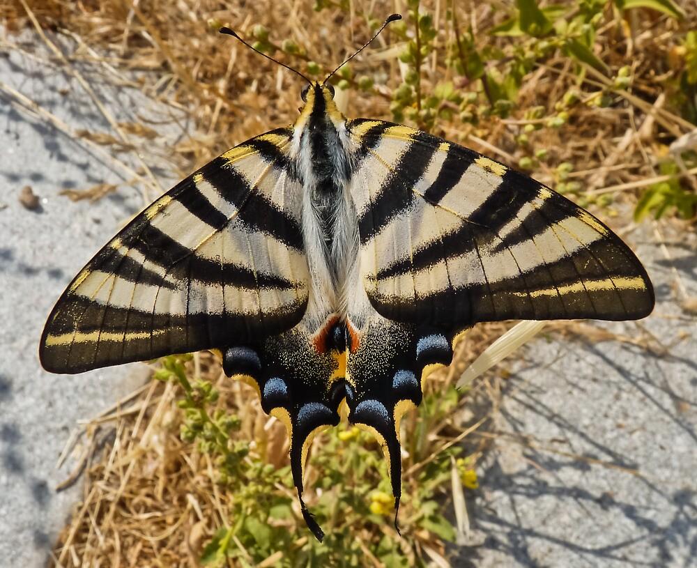 Butterfly I by Soniris