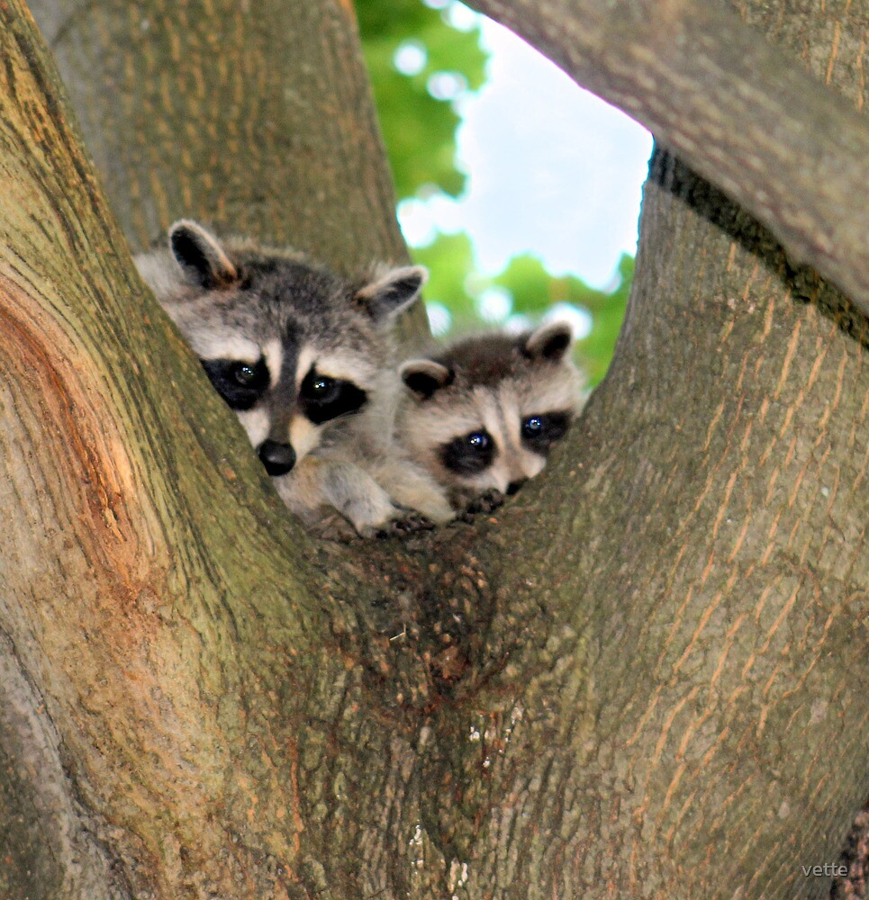 Cute Twosome in a Tree by vette