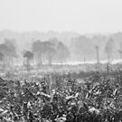 Ashdown Forest in the Snow by Natalie Kinnear