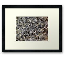 The Fungus Among Us Framed Print