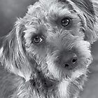 Cute Pup in Black and White by Natalie Kinnear