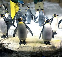 Penguin Army by JustinH22