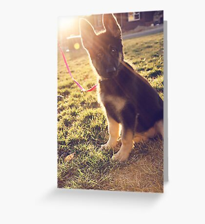 Zelda. Age: 13 Weeks. Greeting Card