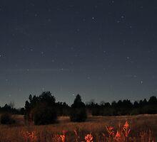 Starfield by David Misko