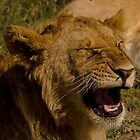 Happy Lion  by JKutchera