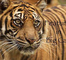 Sumatran Tiger - Big Cats Avatar by AngelaHumphries