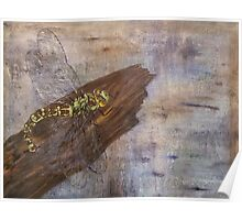 Dragonfly laying eggs on wood Poster