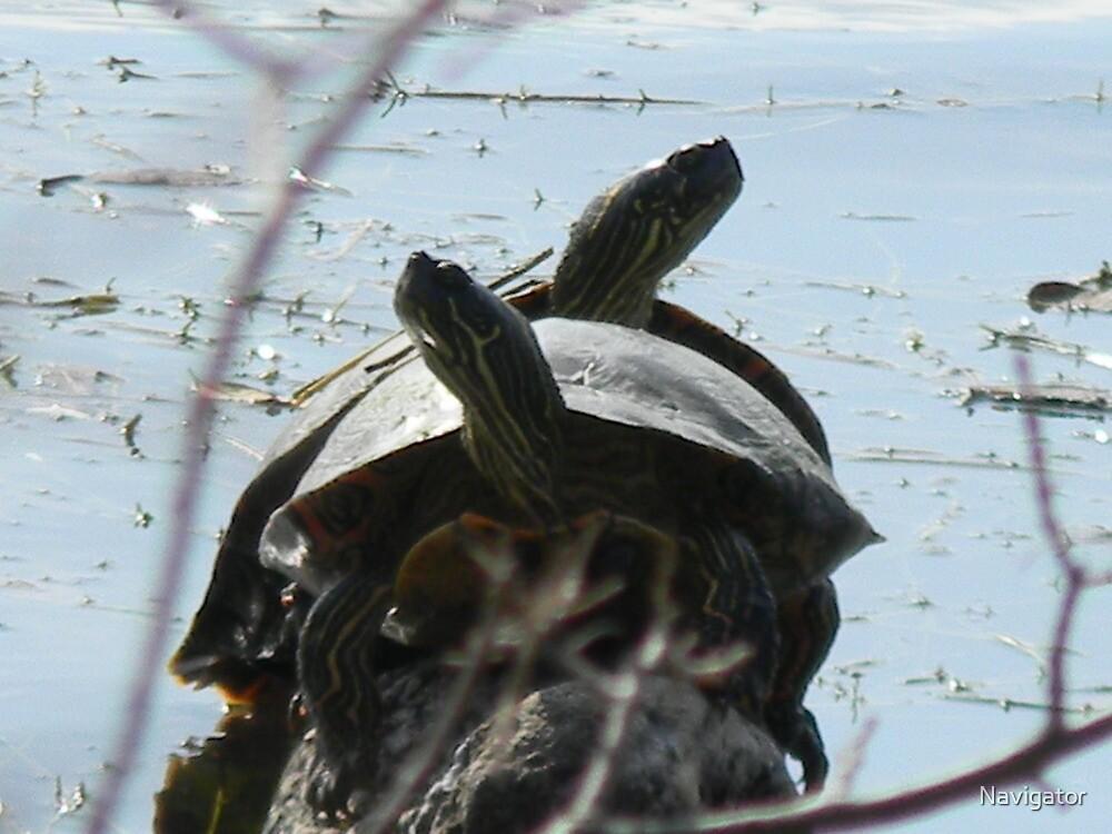 Turtle Sunning by Navigator