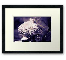 Stark Beauty Framed Print