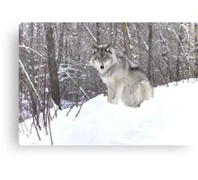 My Wolf : The kiss of the wolf Canvas Print