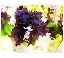 Wine gum flower Poster