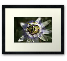 Passion Fruit Framed Print