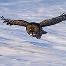 Dark Faced Beauty in Flight by Bill McMullen