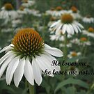 He loves me, he loves me not... by Bernie Garland