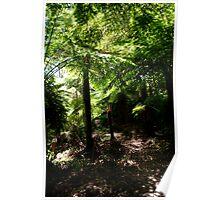 Tree Fern Canopy Poster