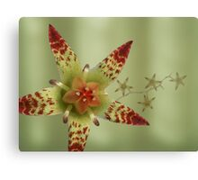 Succulent flower in green Canvas Print