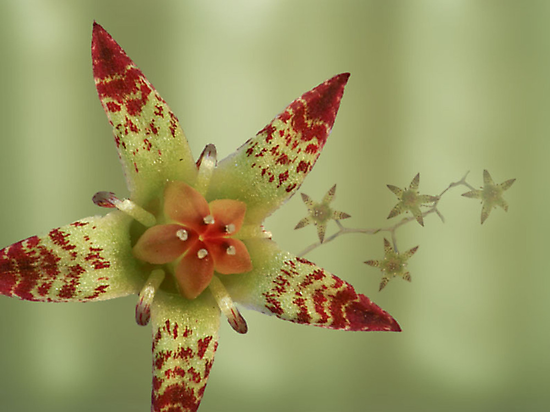 Succulent flower in green by Robyn Selem