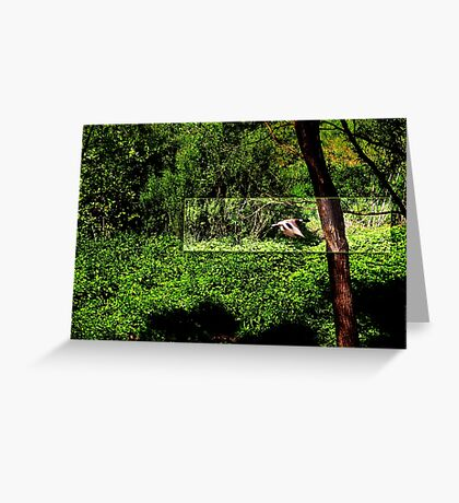 Duck flying by VRS2 Greeting Card