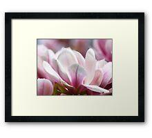 Magnolias VRS2 Framed Print