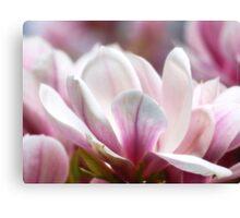 Magnolias VRS2 Canvas Print