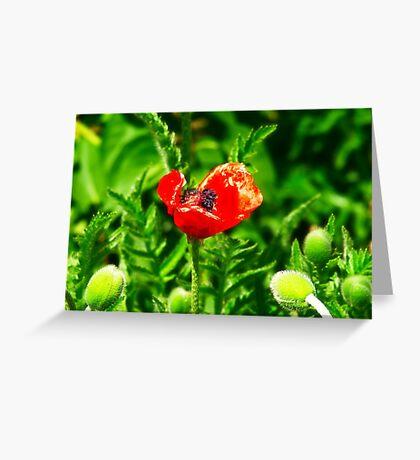 Poppy (Velvia-Style) VRS2 Greeting Card