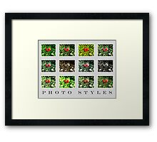 Photography - Picture Styles VRS2 Framed Print