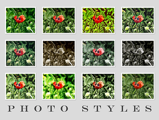 Photography - Picture Styles by vivendulies