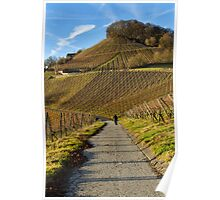 Stollberg, the highest vineyard in Franconia, Germany Poster