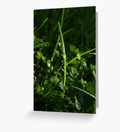 Dew Drops in the Gras VRS2 Greeting Card