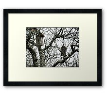 Hanging Bird Houses Framed Print