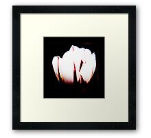 White Tulip Framed Print