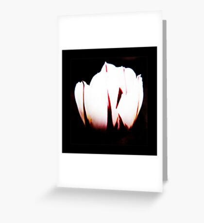 White Tulip VRS2 Greeting Card