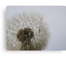 Blowing on Dandelion Seed  VRS2 Canvas Print
