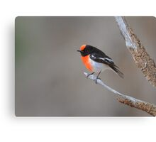 Red capped Robin  Flinders Ranges SA  Canvas Print