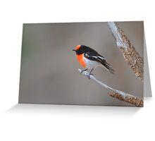 Red capped Robin  Flinders Ranges SA  Greeting Card