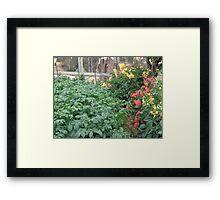 Companion planting Framed Print