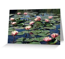 Water Lilies at Bennetts Water Gardens Greeting Card