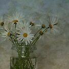 Daisies by dgugeri