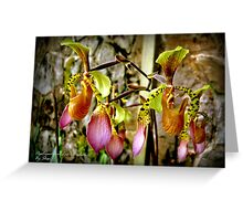 Slipper Orchids Greeting Card