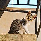 Little Cat by Soniris