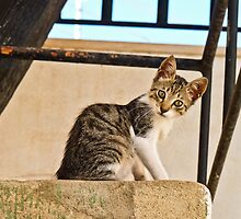 Little Cat by Soniris