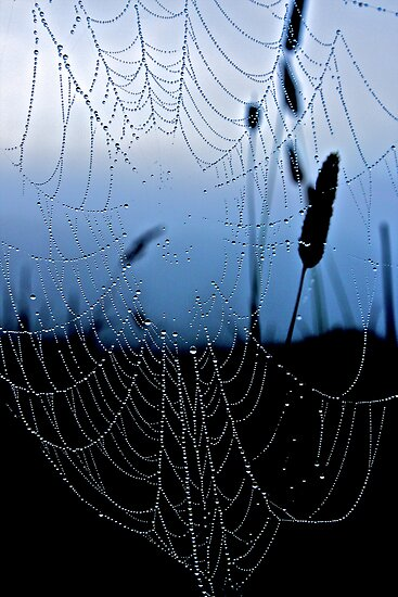 Gossamer Morning by John Butler