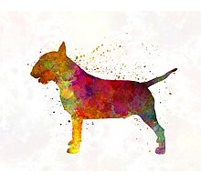 Bull Terrier in watercolor Photographic Print