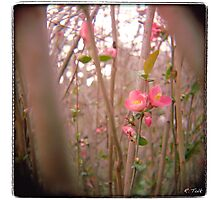 Quince Forest Photographic Print