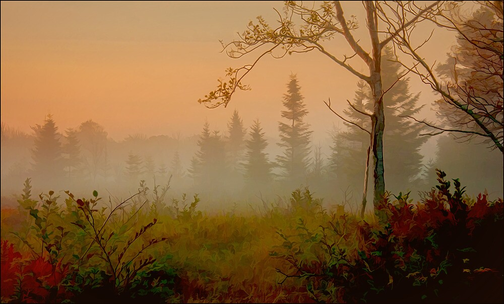 Morning Mist, Petit Manan Maine by Dave  Higgins