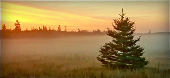 September Missed, Petit Manan Maine by Dave  Higgins